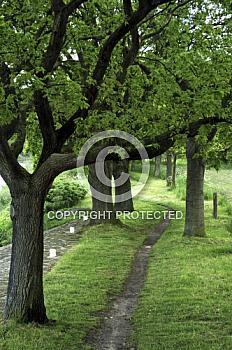 Weg durchs Grüne