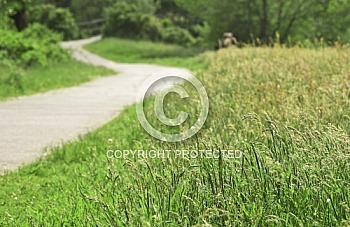Radweg durchs Grüne
