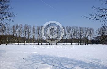Baumreihe im Schnee