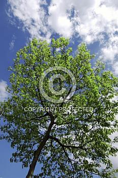 Baum vor blauem Himmel