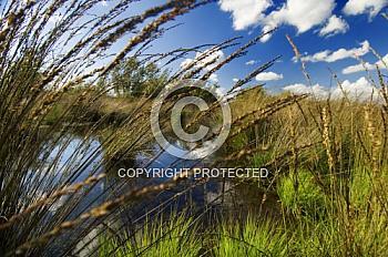 Gräser und Halme mit Moorlandschaft
