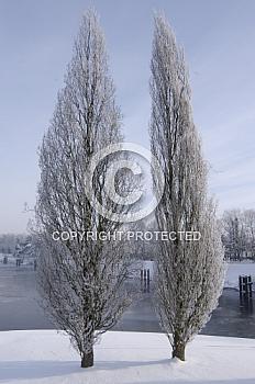 Bäume am Dortmund-Ems-Kanal