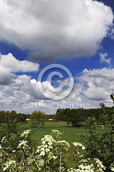 Weidelandschaft mit Wolkenhimmel