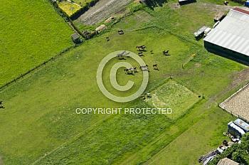 Luftaufnahme von rennenden Pferden in Hümmling