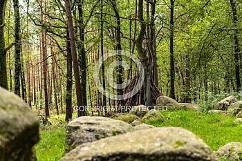Großsteingrab