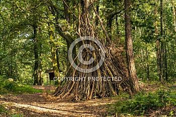 Unterschlupf im Wald