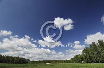 Weidelandschaft mit blauem Himmel