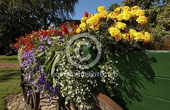 Blumen auf altem Holzwagen