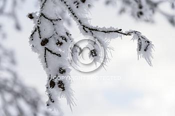 Eine Aufnahme von kleinen Eiskristallen