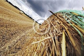 Strohballen auf Feld