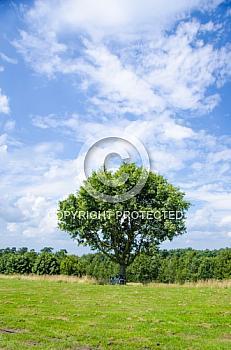 Fahrräder angelehnt an einem Baum