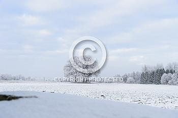 Eine Winterlandschaft mit Schnee und Bäumen