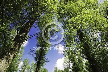 Bäume mit Wolkenhimmel