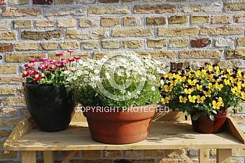 Pflanzen auf Holztisch