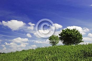 Wiese mit Bäumen und blauem Himmel