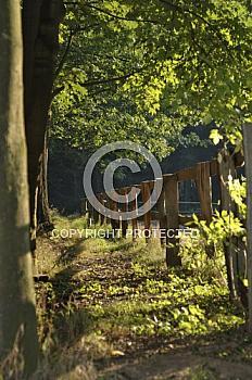 Holzzaun am Waldrand